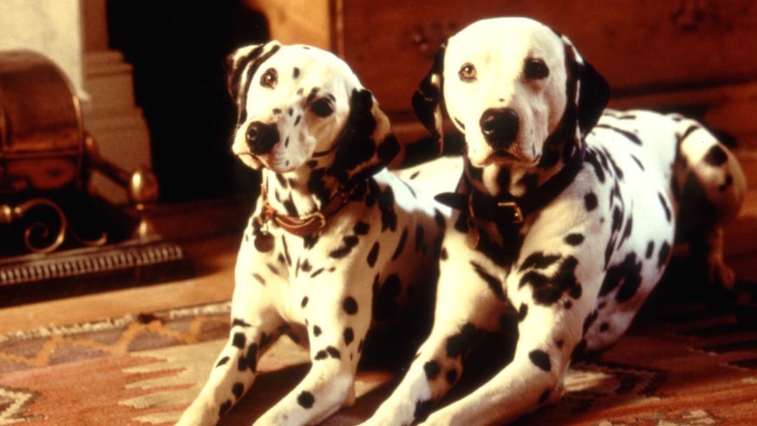101 Dalmatiner Trailer - Diesmal sind die Hunde echt - Bild 1 von 8